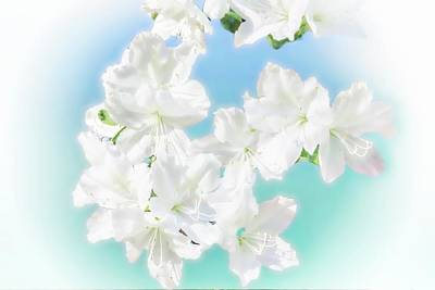 Digital Art - Group Of White Azalea by Rusty R Smith