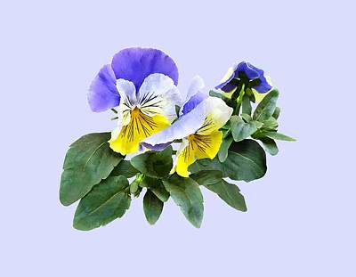 Photograph - Group Of Yellow And Purple Pansies by Susan Savad