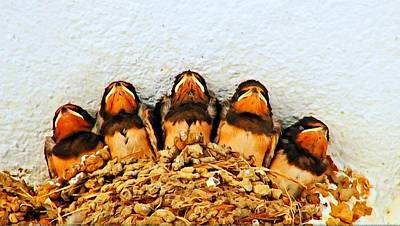 Group Of Young Swallows In The Nest Digitally Painted Art Print by Ken Biggs