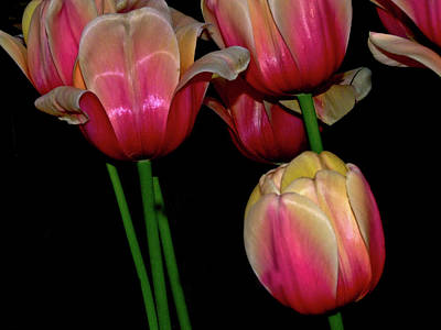 Grouping Ofpink And Yellow Tulips Art Print