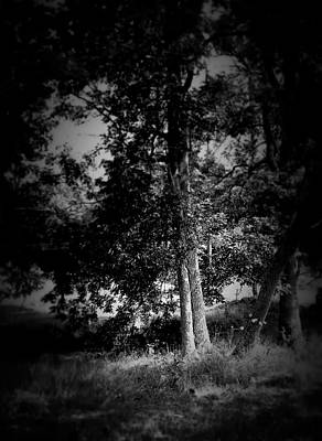 Photograph - Grove In Black And White by Cynthia Lassiter