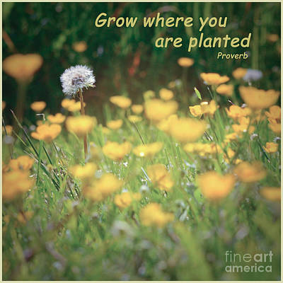 Photograph - Grow Where You Are Planted by Kerri Farley