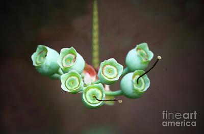 Photograph - Growing Blueberries by Kim Henderson