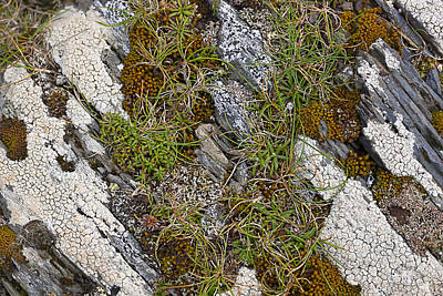 Photograph - Growing In The Cracks by Sandra Ramacher