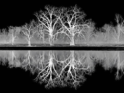 Photograph - Growing Old Together - The Negative by Nikolyn McDonald