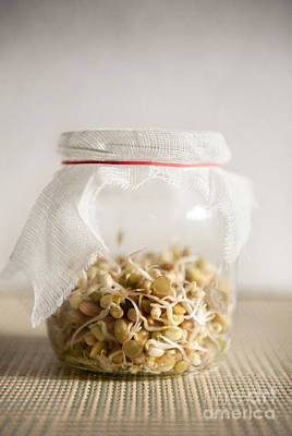 Burgeon Photograph - Growing Sprouts Mix In Glass Jar With Bandage  by Arletta Cwalina