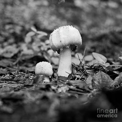Photograph - Growing Together by Patrick M Lynch