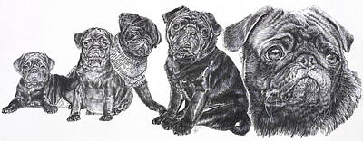 Drawing - Growing Up Black Pug by Barbara Keith