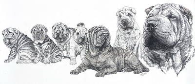 Art Print featuring the drawing Growing Up Chinese Shar-pei by Barbara Keith