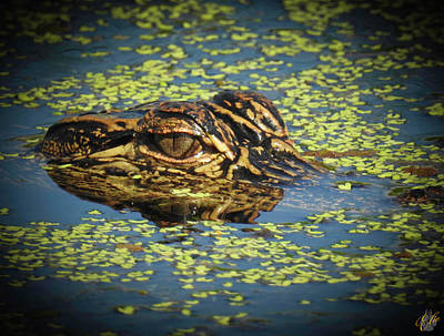 Photograph - Growing Up Gator, No. 31 by Elie Wolf
