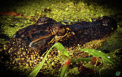 Photograph - Growing Up Gator, No. 35 by Elie Wolf