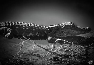 Photograph - Growing Up Gator, No. 37 by Elie Wolf