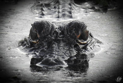 Photograph - Growing Up Gator, No. 39 by Elie Wolf