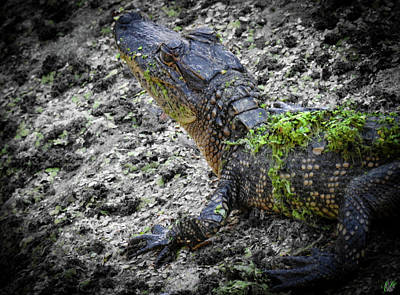 Photograph - Growing Up Gator, No. 40  by Elie Wolf