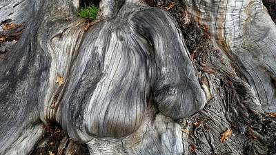 Photograph - Growth On Tree Trunk by Nareeta Martin