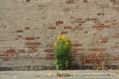 Annette Kinship Wall Art - Photograph - Growth With In The Concrete Walls by Annette Kinship