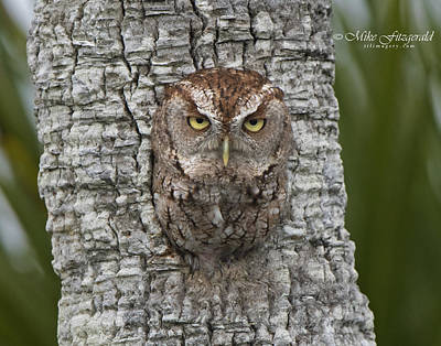 Photograph - Grumph Owl by Mike Fitzgerald