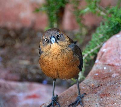 Queen - Grumpy Bird by Martin Massari