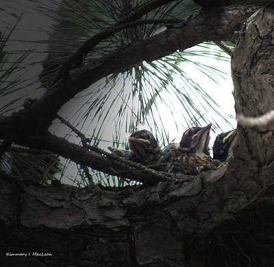 Photograph - Grumpy Birds by Kimmary I MacLean