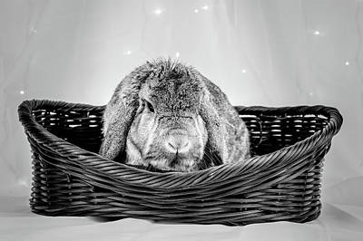 Photograph - Grumpy Bunny In A Basket Bw by Jeanette Fellows