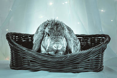 Photograph - Grumpy Bunny In A Basket by Jeanette Fellows