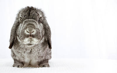 Photograph - Grumpy Bunny by Jeanette Fellows