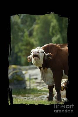 Grumpy Cow Talk Art Print by The one eyed Raven