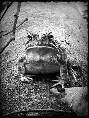 Photograph - Grumpy Frog by Kelly Hazel