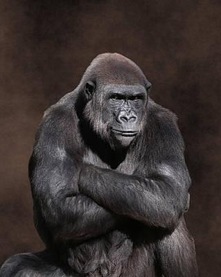 Photograph - Grumpy Gorilla by Debi Dalio