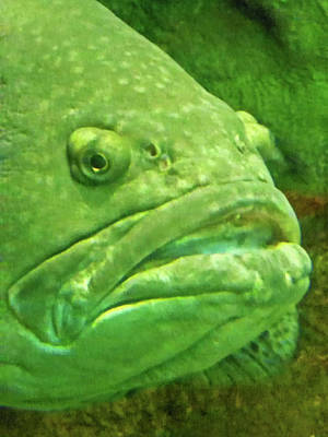 Photograph - Grumpy Old Fish by Elizabeth Hoskinson