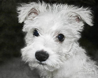 Photograph - Grumpy Puppy by Terri Waters