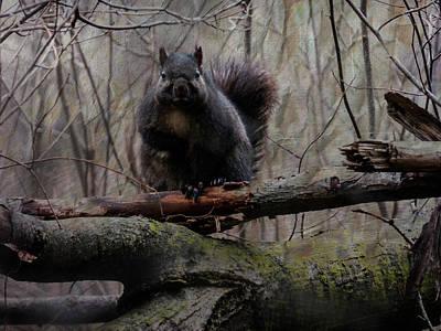 Digital Art - Grumpy Squirrel by Leslie Montgomery