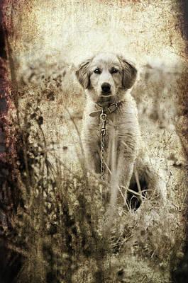 Golden Retrievers Photograph - Grunge Puppy by Meirion Matthias