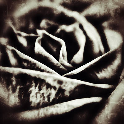 Photograph - Grunge Rose by Nathan Little