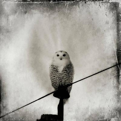Photograph - Grunge Snowy by Brenda Conrad
