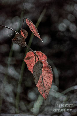 Photograph - Grungy Leaves by Elaine Teague