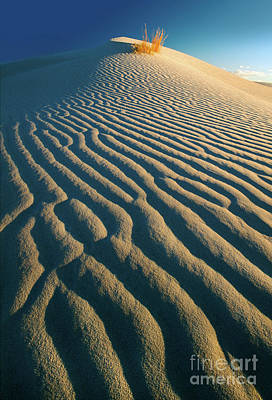 Guadalupe Photograph - Guadalupe Dunes by Inge Johnsson