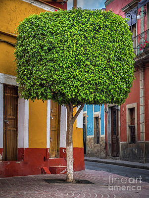 Guanajuato Photograph - Guanajuato Tree by Inge Johnsson
