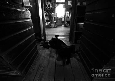 Guard Dog Art Print by David Lee Thompson