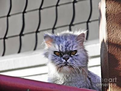 Photograph - Guard Kitty 1 by Sarah Loft