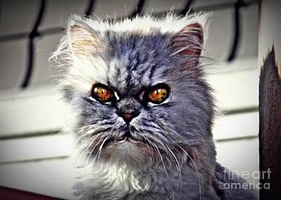 Photograph - Guard Kitty 2 by Sarah Loft