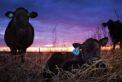 Kansas Artist Photograph - Guarded by Thomas Zimmerman