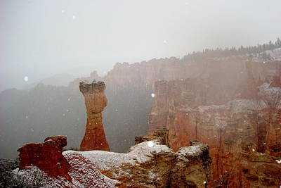 Family Of Colors Photograph - Guardian Of Snowy Bryce by Yuri Tomashevi