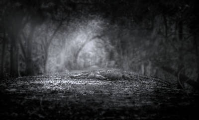Photograph - Guardian Of The Forest by Mark Andrew Thomas