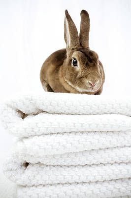 Photograph - Guardian Of Towels by Jeanette Fellows
