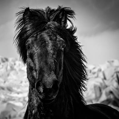 Iceland Horse Wall Art - Photograph - Guardian by Tim Booth