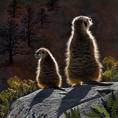Meerkat Digital Art - Guarding Meerkats by Thanh Thuy Nguyen