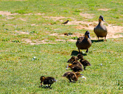 Photograph - Guarding The Family by Clayton Bruster