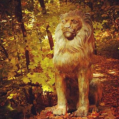 Animals Wall Art - Photograph - Guarding The Forest by Heidi Hermes