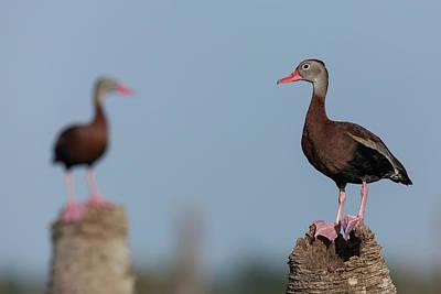Photograph - Guarding The Wetlands by David Watkins